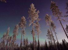 une aurore boréale au milieu d'une forêt en laponie